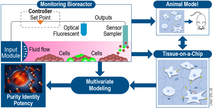 Chart style illustration depicting the monitoring of a Bioreactor, showing cells move towards a sensor sample, modeling to purity identity potency